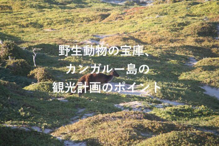 カンガルーのアイキャッチ写真